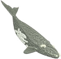 Embroidery design of the southern right whale.