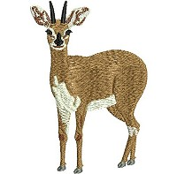 Embroidery design of a steenbok.