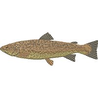 Image of petbrowntrout200.jpg